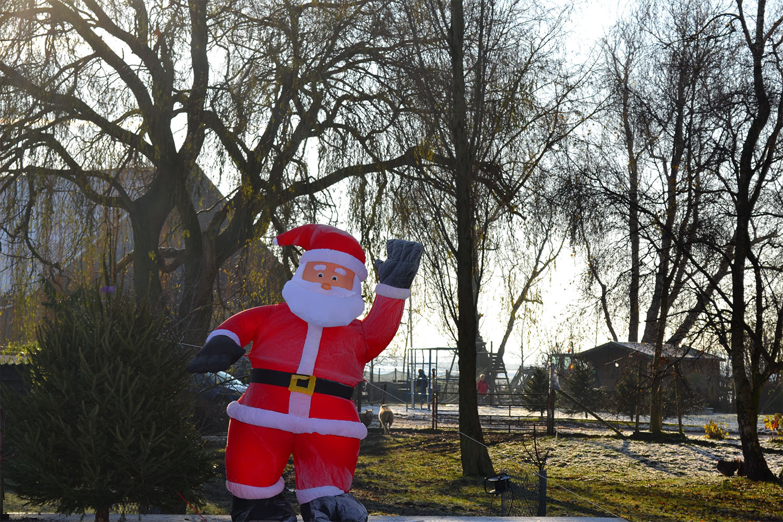 Nordmann Excellent kerstbomen Lijnden